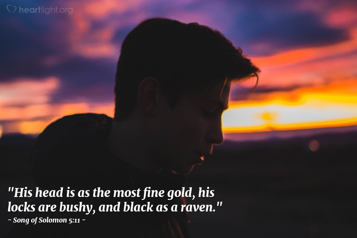 "Illustration of Song of Solomon 5:11 — ""His head is as the most fine gold, his locks are bushy, and black as a raven."""
