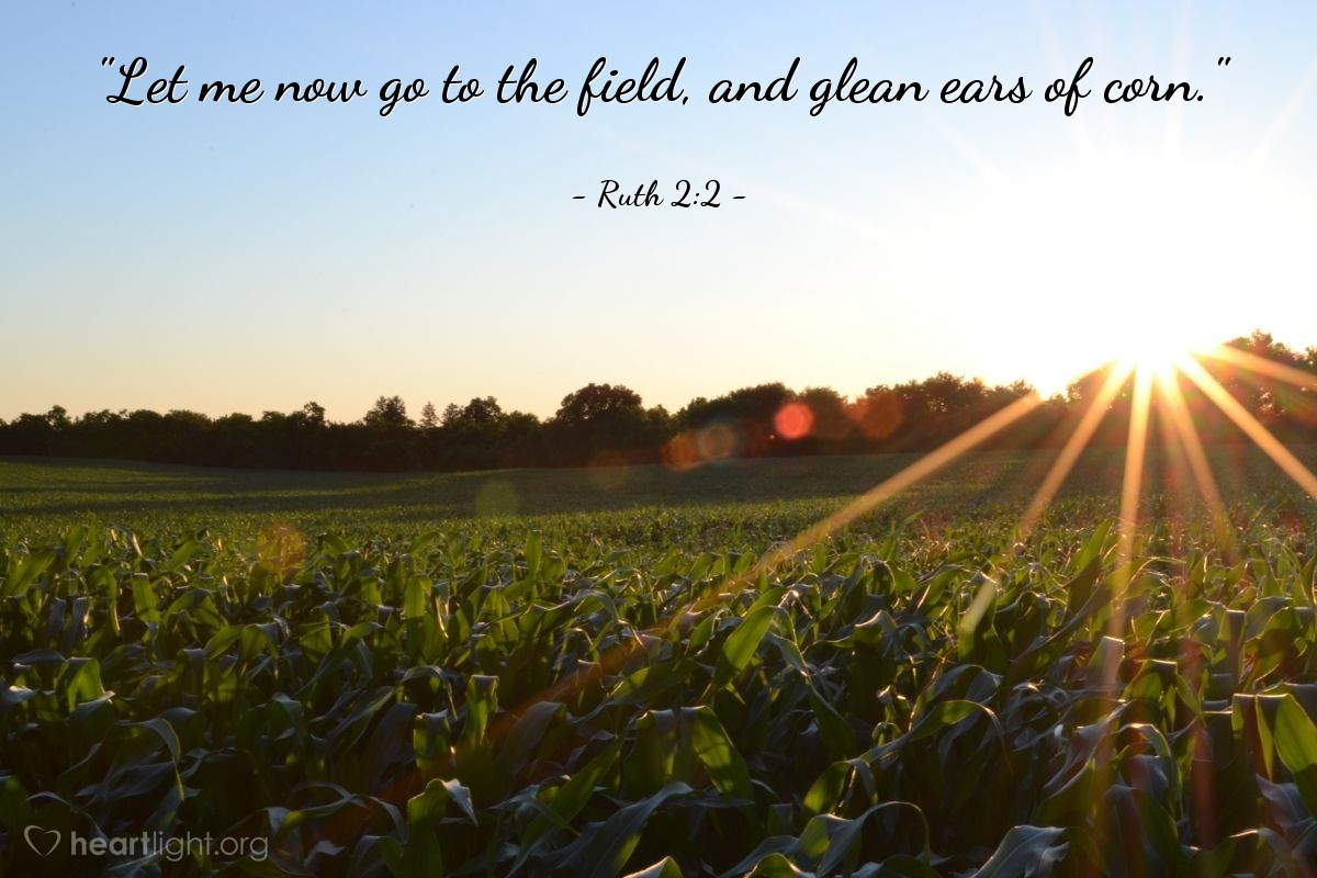 "Illustration of Ruth 2:2 — ""Let me now go to the field, and glean ears of corn."""