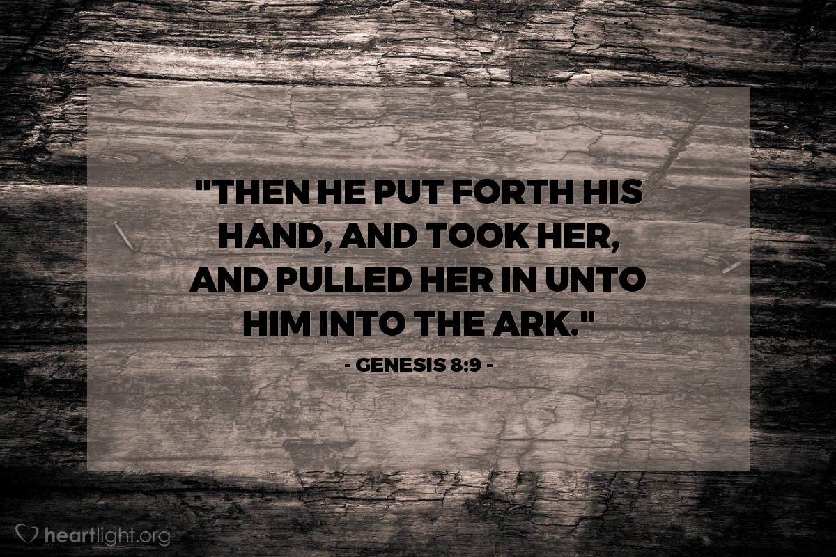 "Illustration of Genesis 8:9 — ""Then he put forth his hand, and took her, and pulled her in unto him into the ark."""