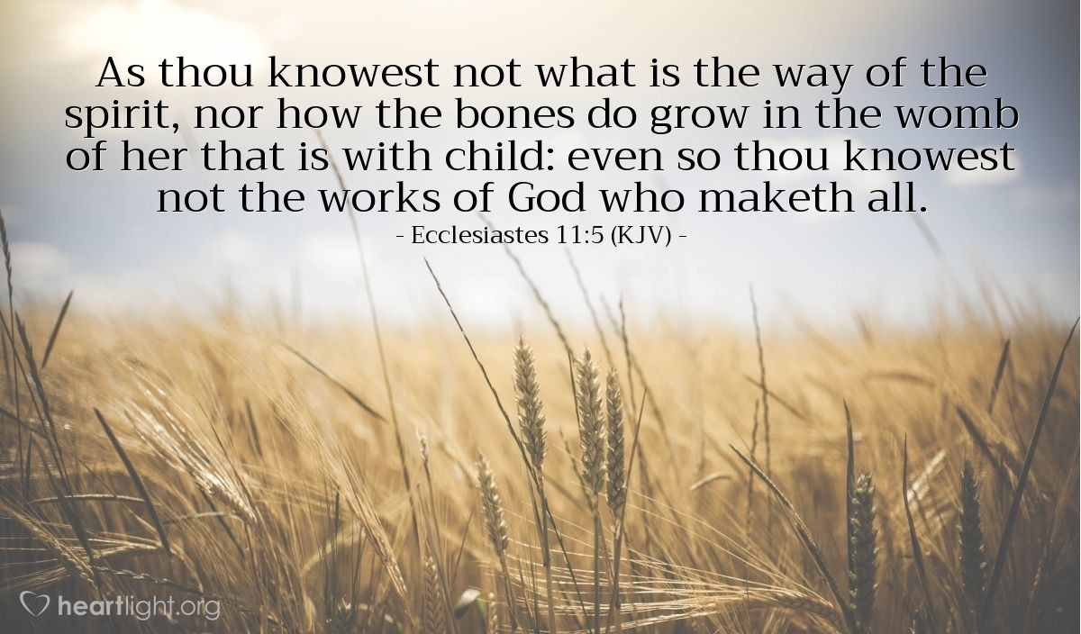 Illustration of Ecclesiastes 11:5 (KJV) — As thou knowest not what is the way of the spirit, nor how the bones do grow in the womb of her that is with child: even so thou knowest not the works of God who maketh all.