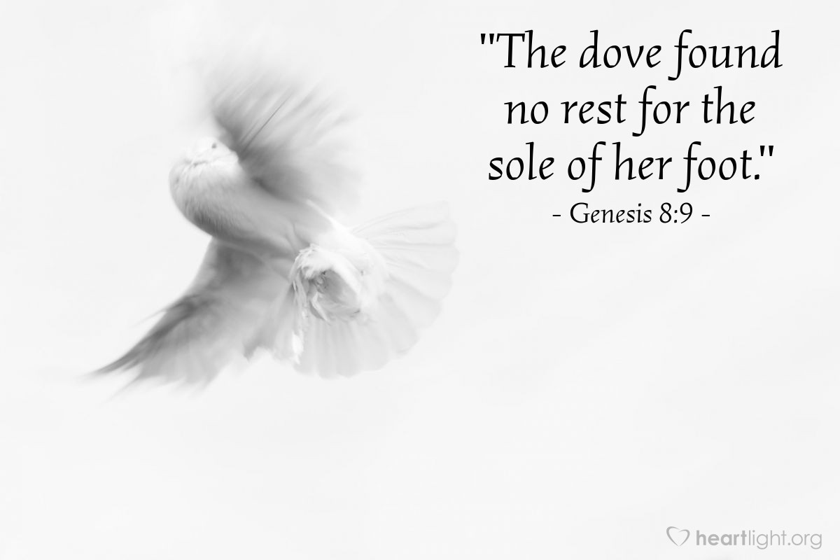 """Illustration of Genesis 8:9 — """"The dove found no rest for the sole of her foot."""""""