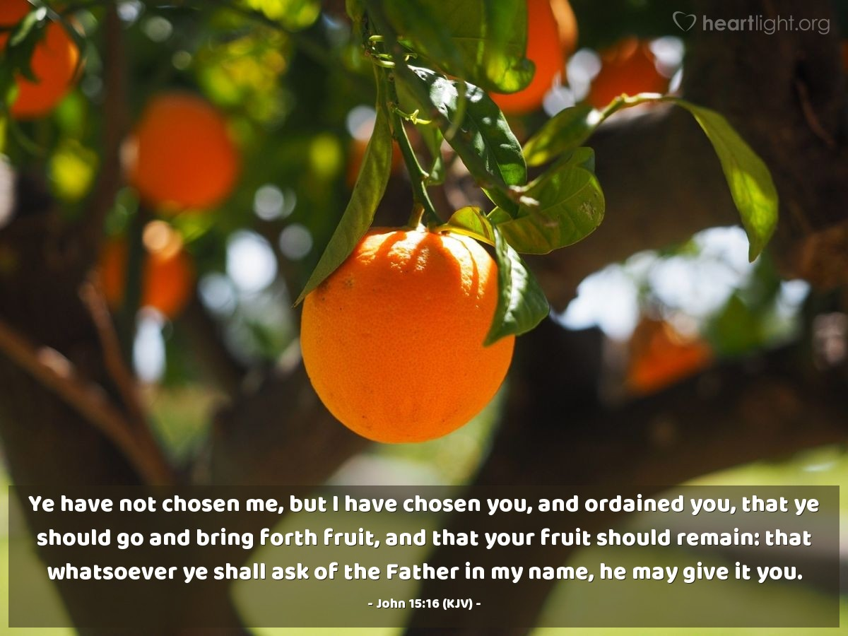 Illustration of John 15:16 (KJV) — Ye have not chosen me, but I have chosen you, and ordained you, that ye should go and bring forth fruit, and that your fruit should remain: that whatsoever ye shall ask of the Father in my name, he may give it you.