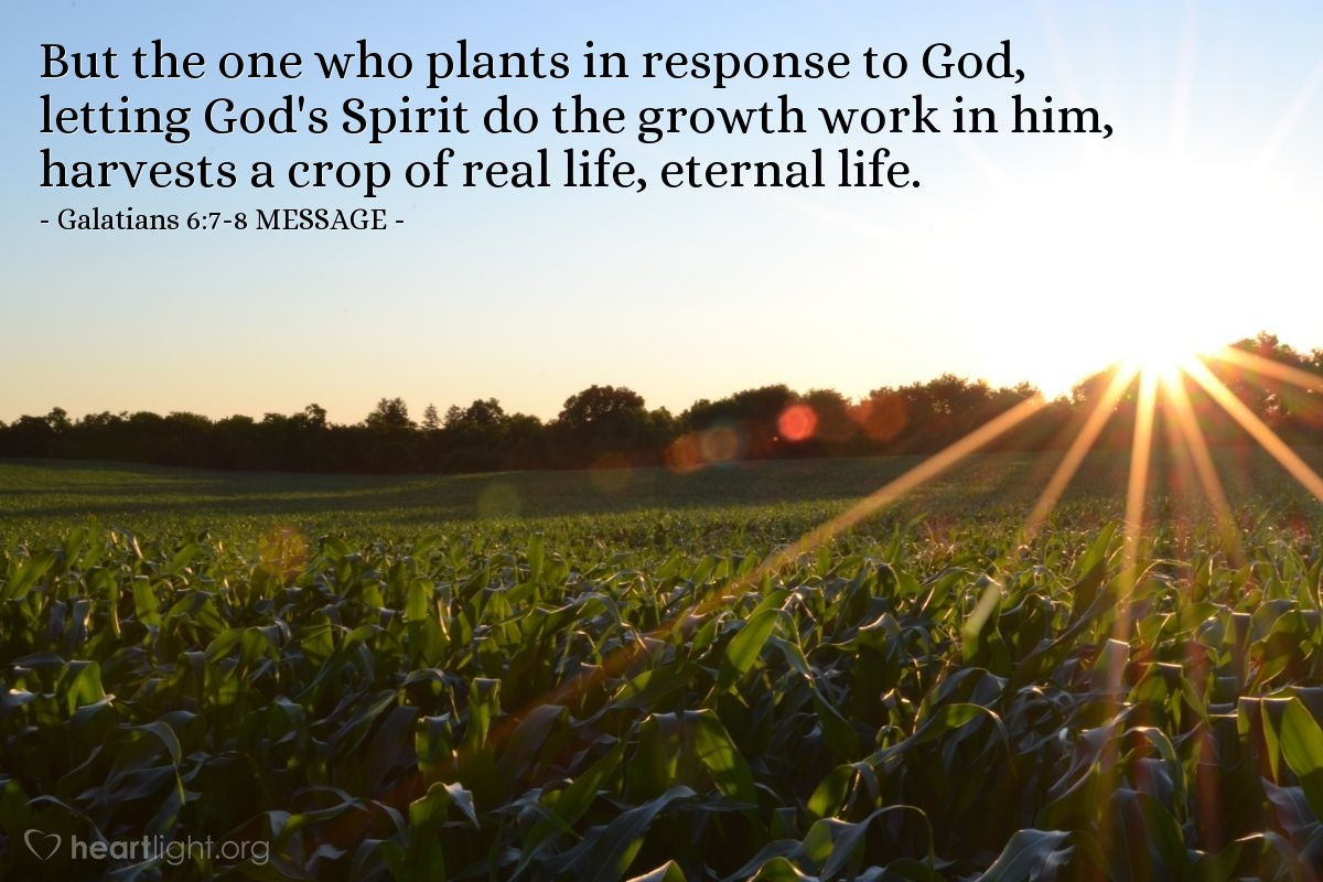 Illustration of Galatians 6:7-8 MESSAGE —  But the one who plants in response to God, letting God's Spirit do the growth work in him, harvests a crop of real life, eternal life.