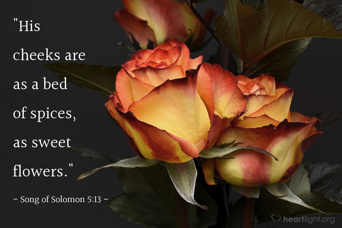 """Illustration of Song of Solomon 5:13 — """"His cheeks are as a bed of spices, as sweet flowers."""""""
