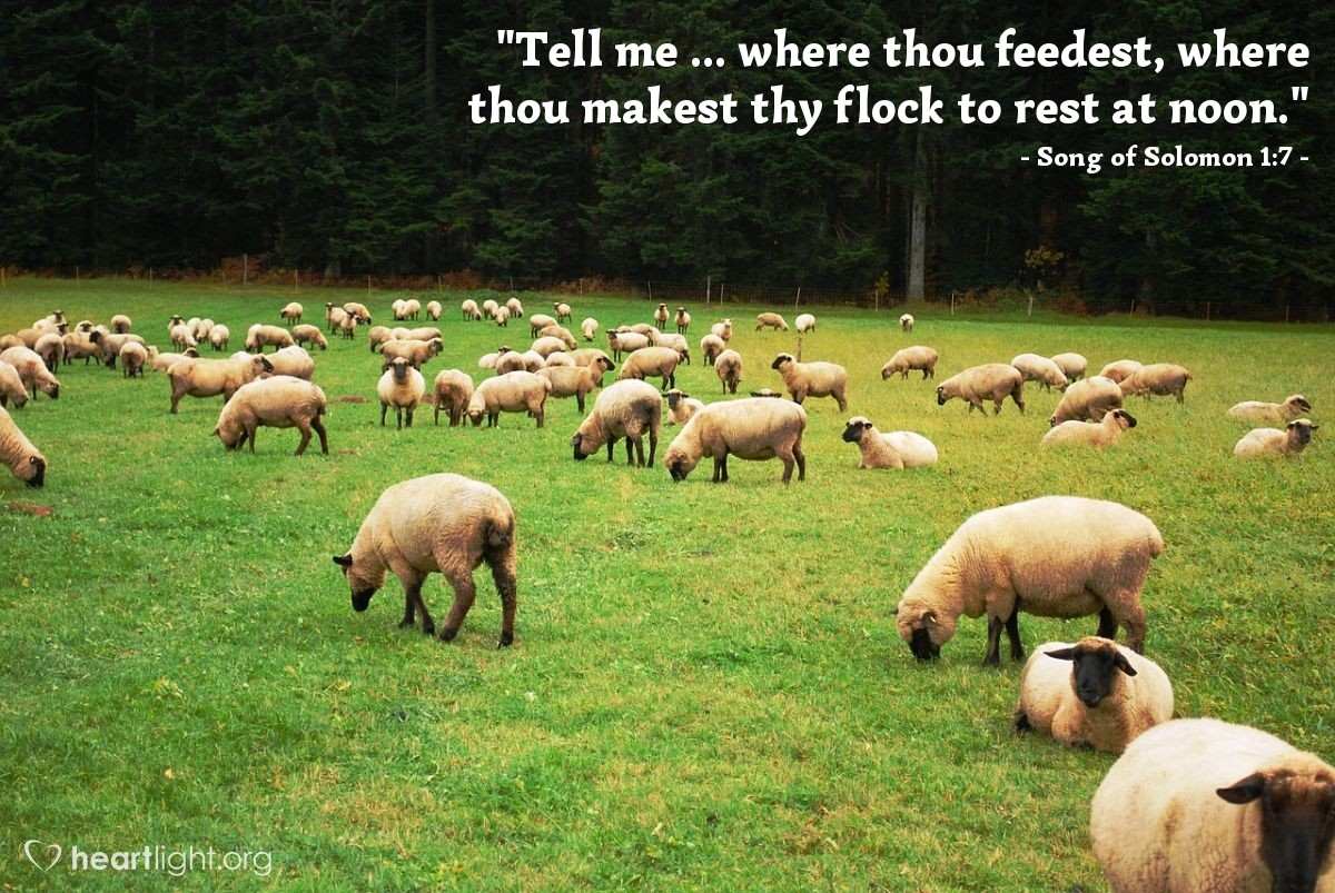 """Illustration of Song of Solomon 1:7 — """"Tell me ... where thou feedest, where thou makest thy flock to rest at noon."""""""