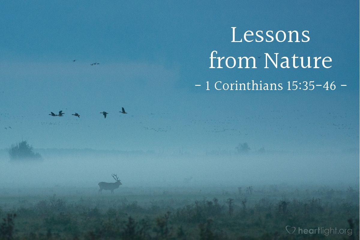 Lessons from Nature — 1 Corinthians 15:35-46