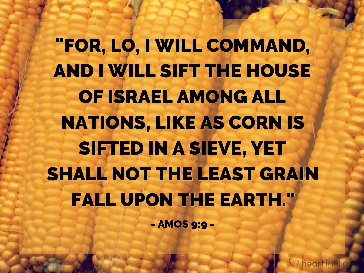 "Illustration of Amos 9:9 — ""For, lo, I will command, and I will sift the house of Israel among all nations, like as corn is sifted in a sieve, yet shall not the least grain fall upon the earth."""