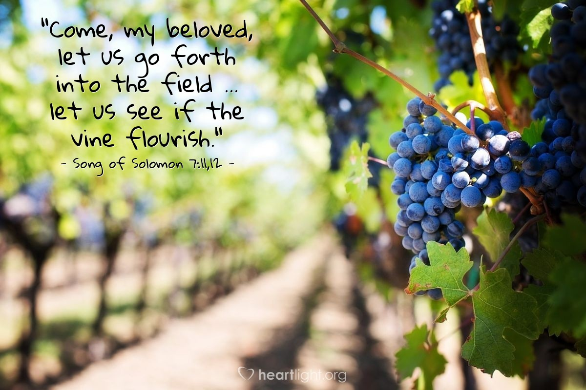 "Illustration of Song of Solomon 7:11,12 — ""Come, my beloved, let us go forth into the field ... let us see if the vine flourish."""
