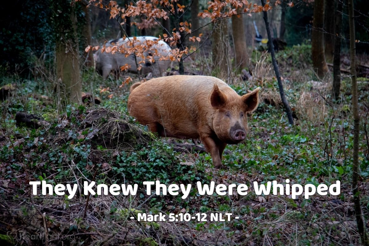 "Illustration of Mark 5:10-12 NLT — ""Send us to the pigs. Let us go into them."""