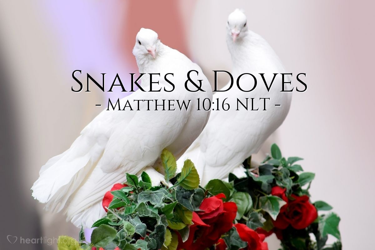 "Illustration of Matthew 10:16 NLT — ""Listen! I am sending you, and you will be like sheep among wolves. So be smart like snakes. But also be like doves and do nothing wrong."""