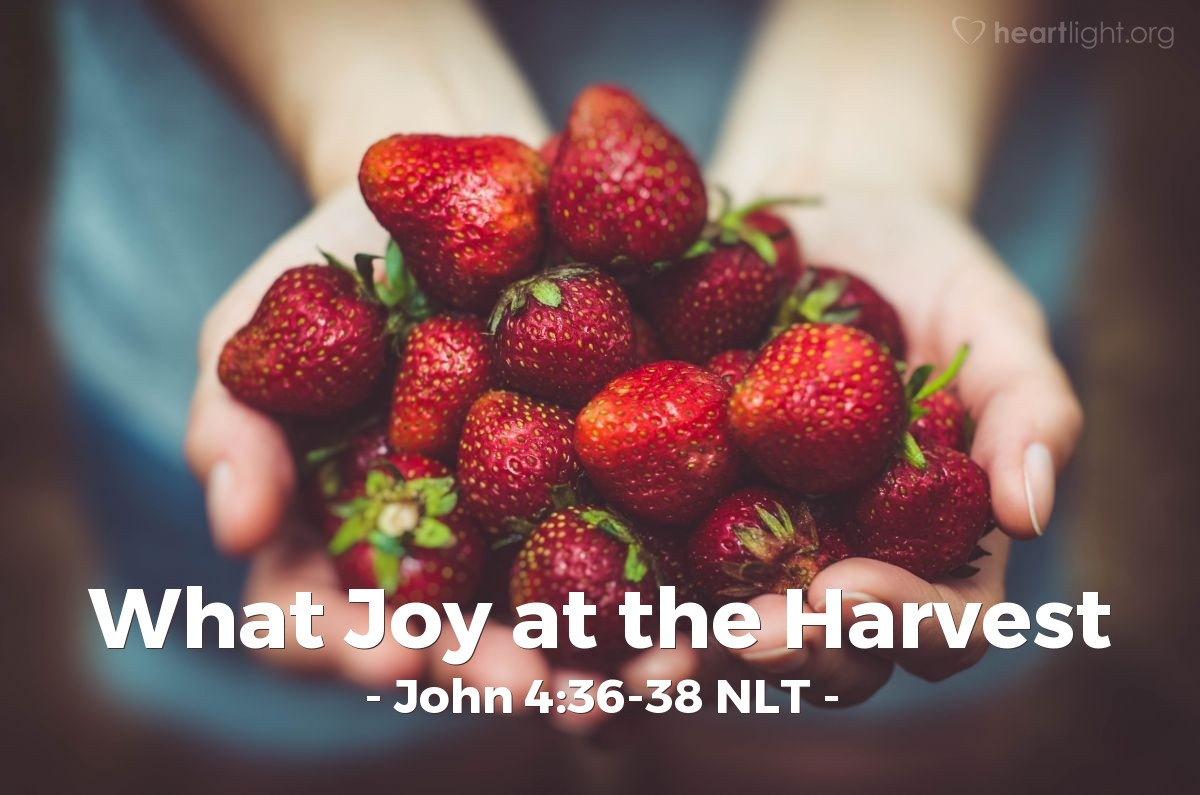 "Illustration of John 4:36-38 NLT — ""The harvesters are paid good wages, and the fruit they harvest is people brought to eternal life."""