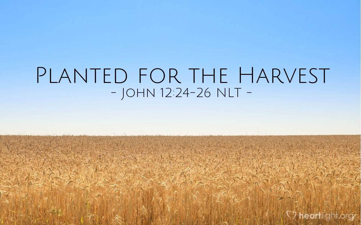 "Illustration of John 12:24-26 — ""I tell you the truth."""