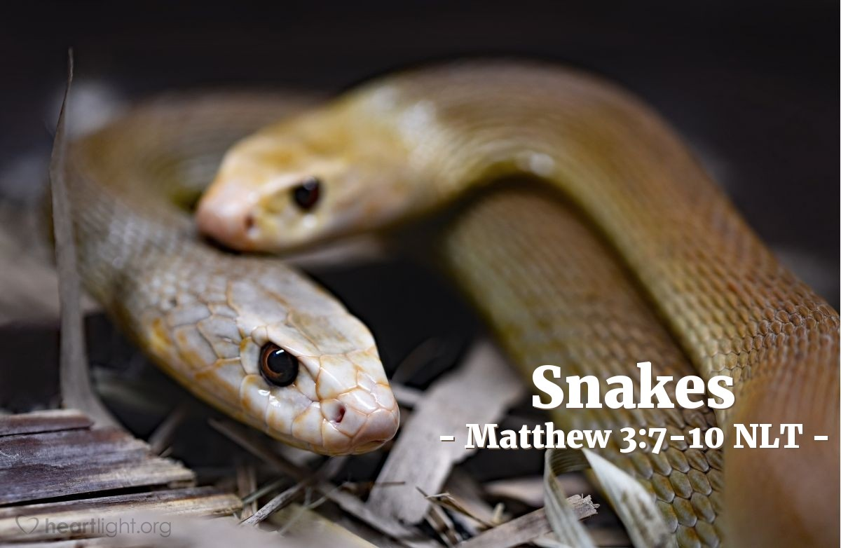 "Illustration of Matthew 3:7-10 NLT —  When John saw them he said to them: ""You are all snakes!"