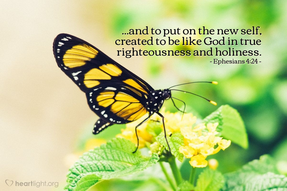 Illustration of Ephesians 4:24 on New Life