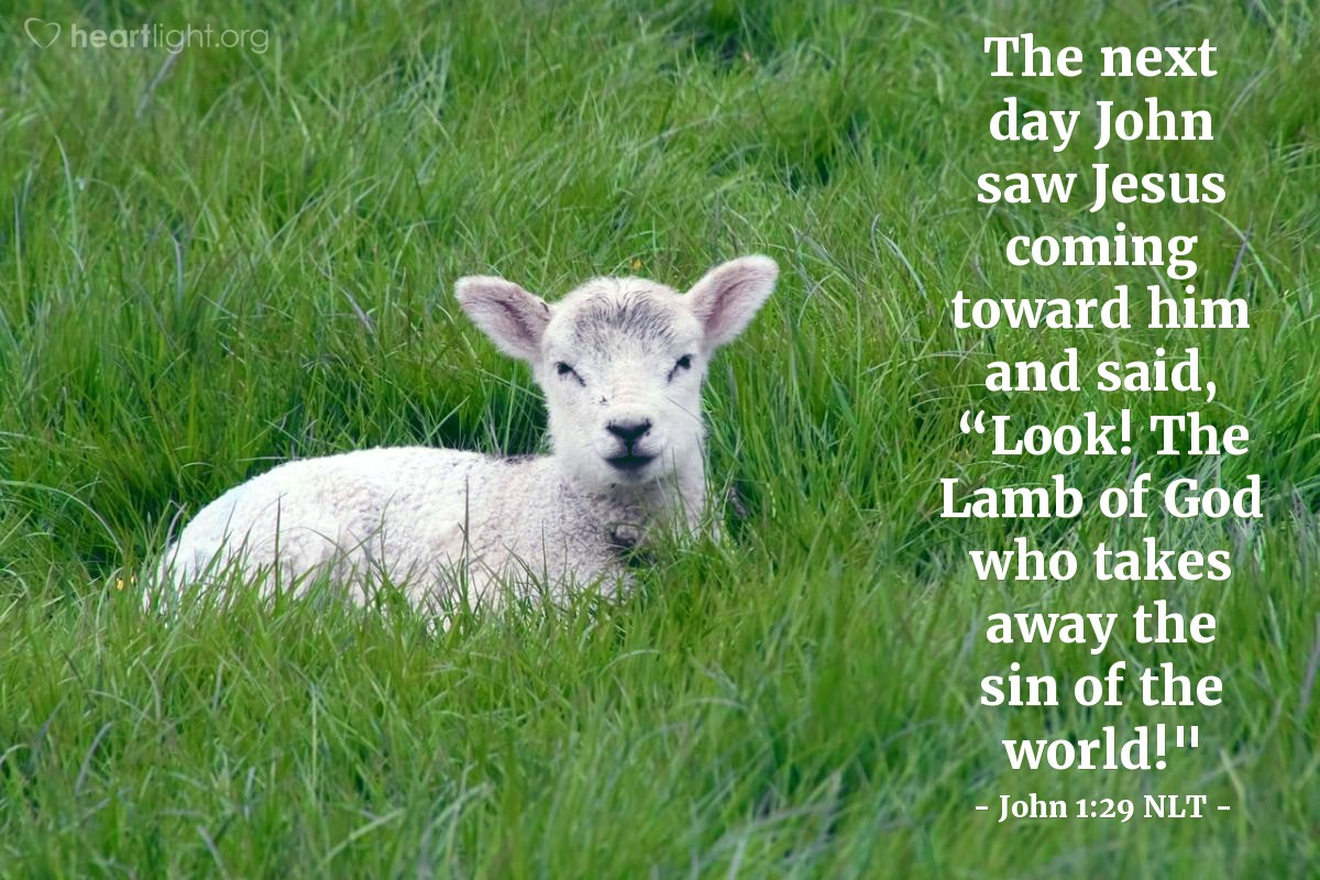 "Illustration of John 1:29 NLT — The next day John saw Jesus coming toward him and said, ""Look! The Lamb of God who takes away the sin of the world!"""