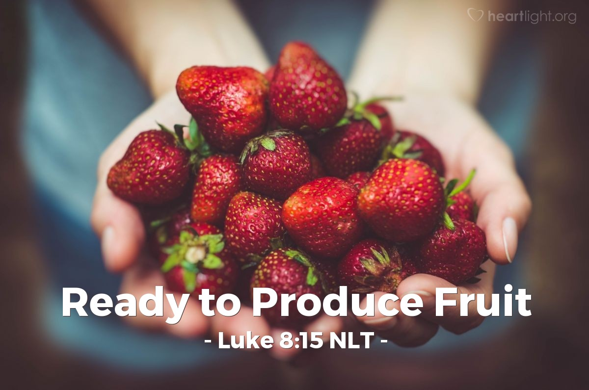 "Illustration of Luke 8:15 NLT — ""And what is the seed that fell on the good ground? That is like the people that hear God's teaching with a good, honest heart. They obey God's teaching and patiently make good fruit."""