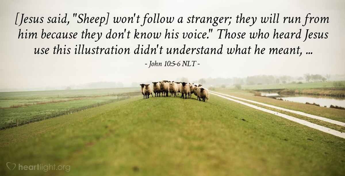 "Illustration of John 10:5-6 NLT — ""But sheep will never follow a person they don't know. They will run away from that person, because they don't know his voice."""
