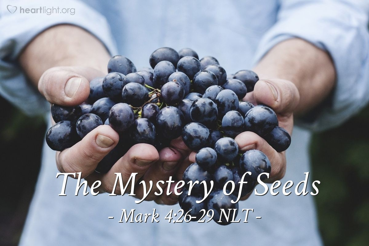 "Illustration of Mark 4:26-29 NLT — ""The kingdom of God is like a man that plants seed in the ground."""
