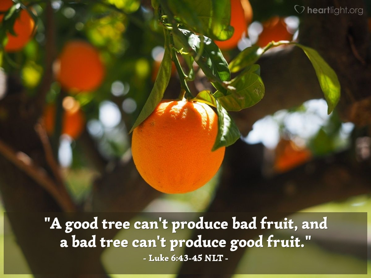 "Illustration of Luke 6:43-45 NLT — ""A good tree can't produce bad fruit, and a bad tree can't produce good fruit."""