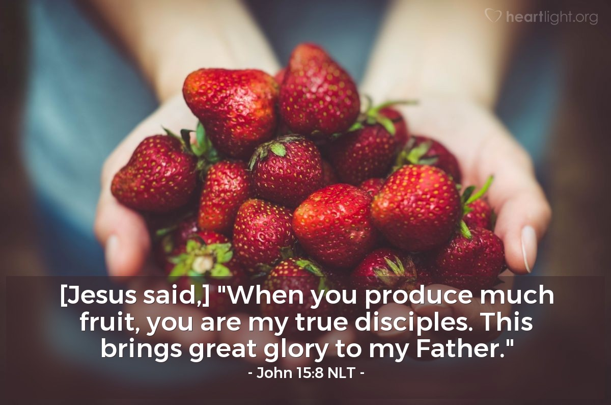 "Illustration of John 15:8 NLT — [Jesus said,] ""When you produce much fruit, you are my true disciples. This brings great glory to my Father."""