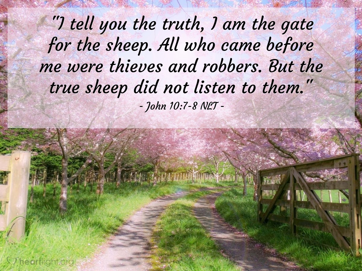 """Illustration of John 10:7-8 NLT — """"I tell you the truth, I am the gate for the sheep. All who came before me were thieves and robbers. But the true sheep did not listen to them."""""""