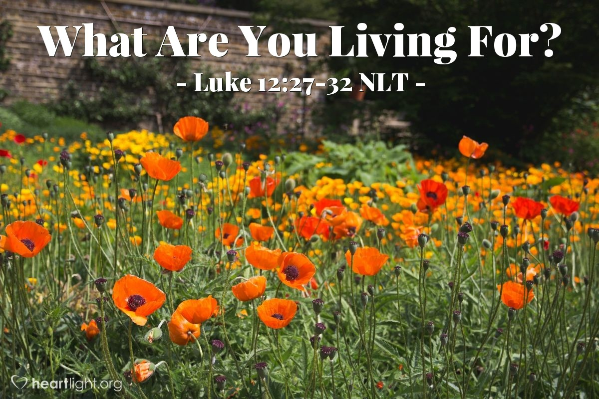 Illustration of Luke 12:27-32 NLT —  And don't be concerned about what to eat and what to drink.