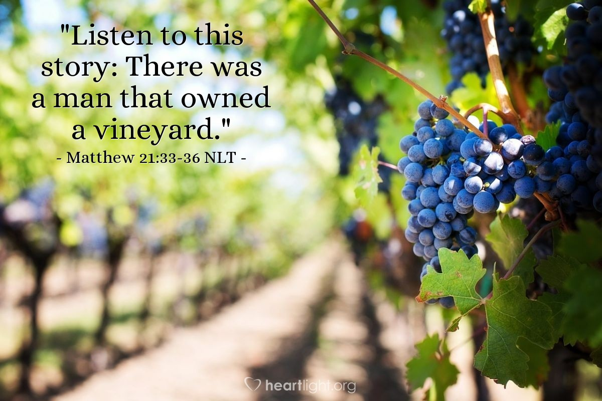 "Illustration of Matthew 21:33-36 NLT — ""Listen to this story: There was a man that owned a vineyard."""