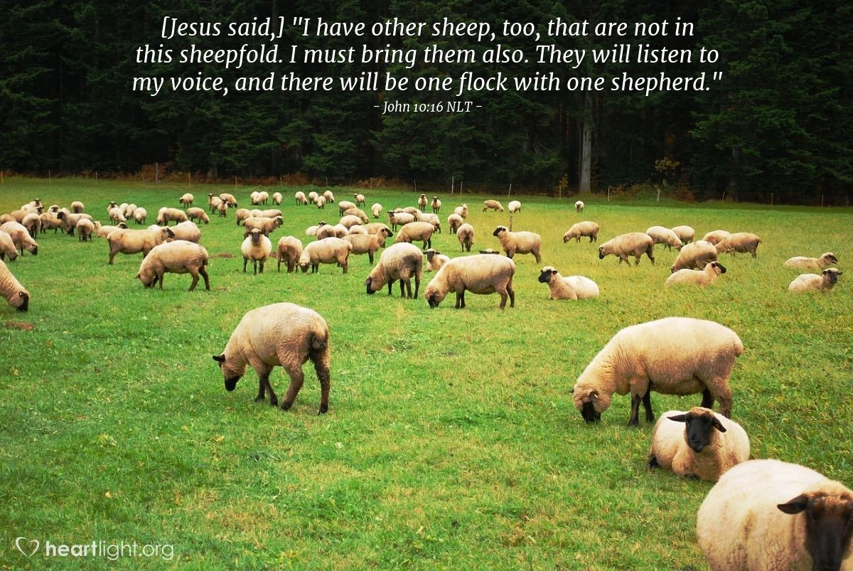 "Illustration of John 10:16 NLT — [Jesus said,] ""I have other sheep, too, that are not in this sheepfold. I must bring them also. They will listen to my voice, and there will be one flock with one shepherd."""