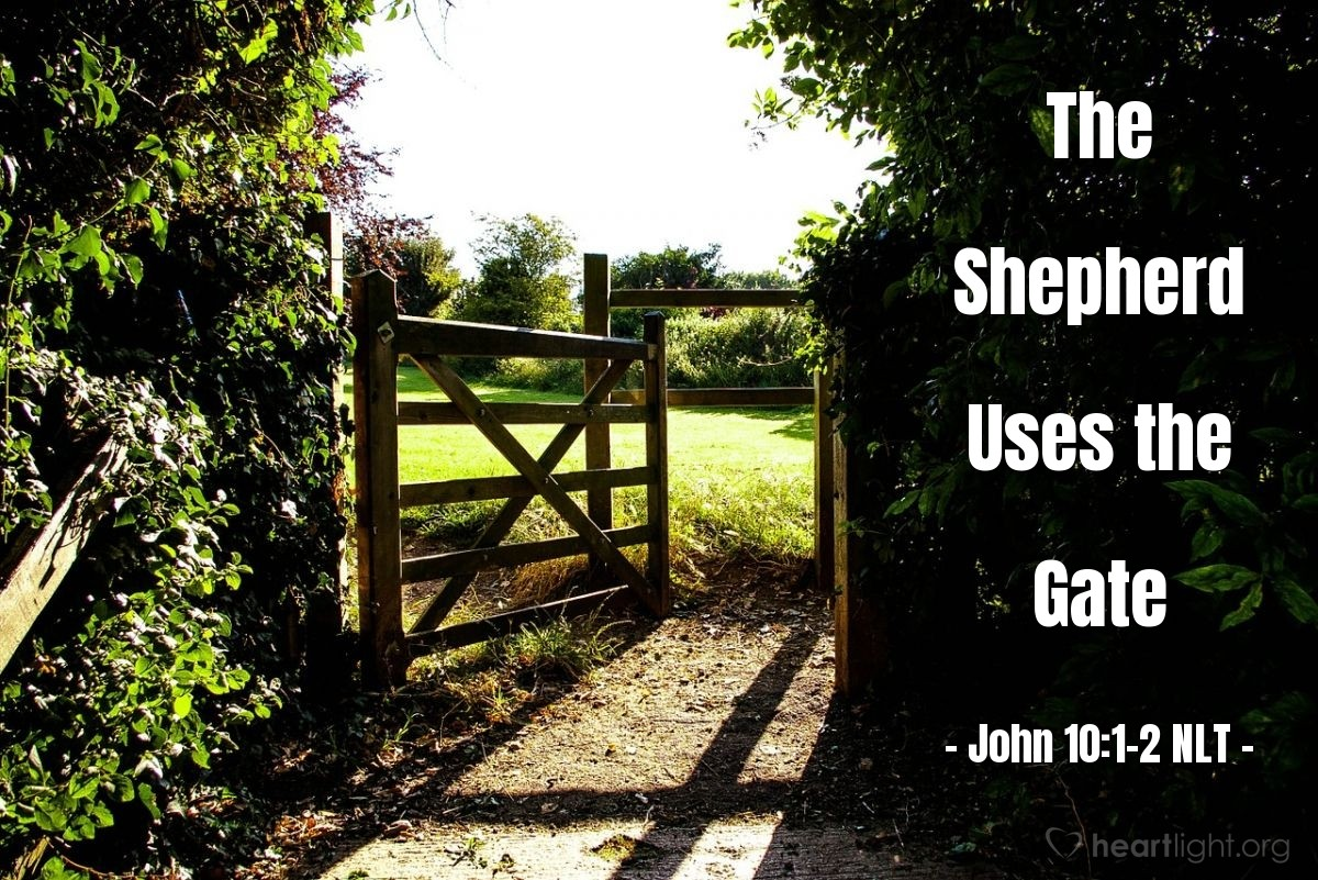"Illustration of John 10:1-2 NLT — ""I tell you the truth, anyone who sneaks over the wall of a sheepfold, rather than going through the gate, must surely be a thief and a robber!"""