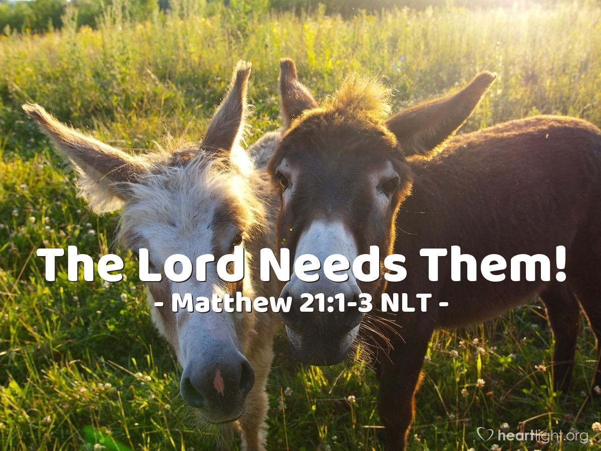Illustration of Matthew 21:1-3 —  If any person asks you why you are taking the donkeys, tell that person, 'The Master needs these donkeys.