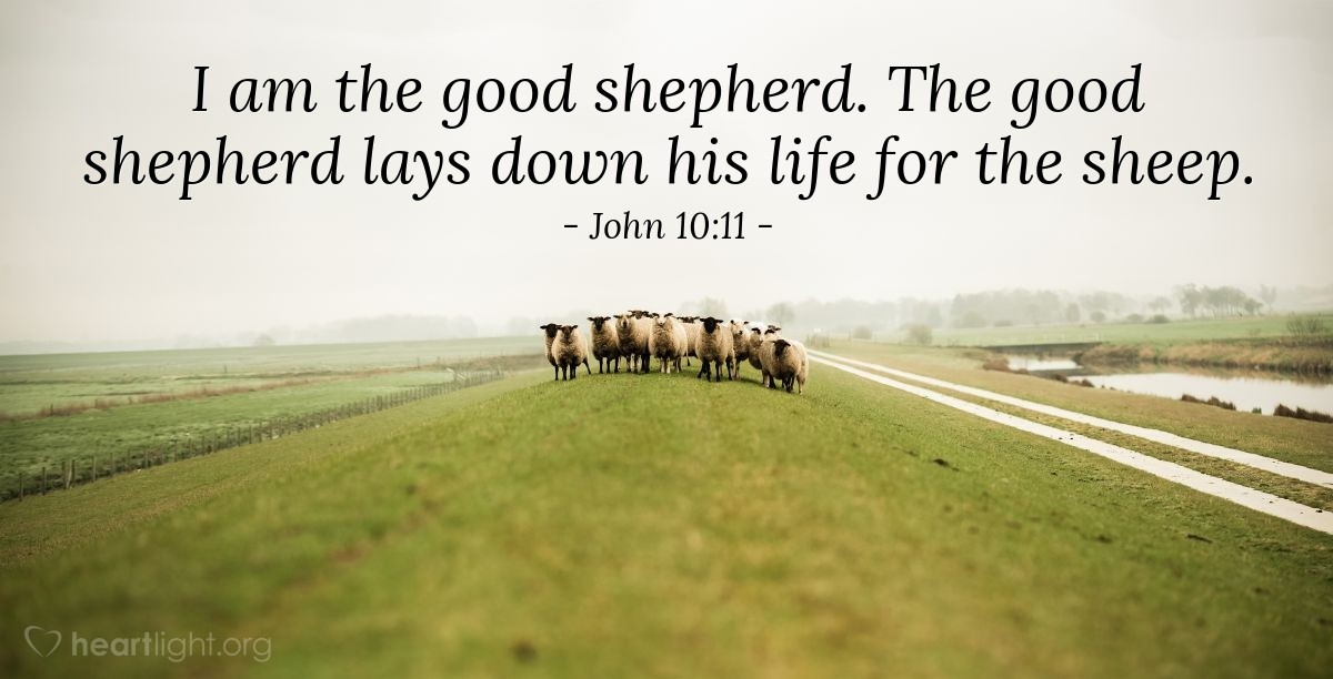 Illustration of John 10:11 — I am the good shepherd. The good shepherd lays down his life for the sheep.