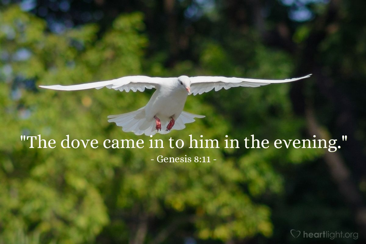"Illustration of Genesis 8:11 — ""The dove came in to him in the evening."""