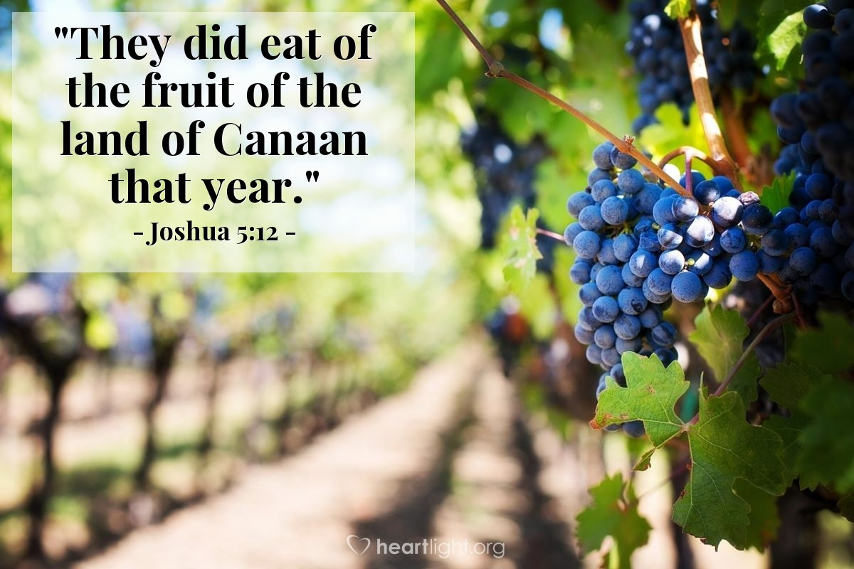 """Illustration of Joshua 5:12 — """"They did eat of the fruit of the land of Canaan that year."""""""